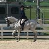 Kim & Snort  trotting in Arabian Hunter Pleasure Class 06-14-14
