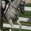 Snort 06-14-14 Working in Arabian Hunter Pleasure Class